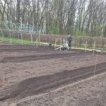 prace gruntowe w plantacji 6