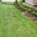 zadbany trawnik 2