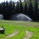 nawadnianie szkolki lesnej 2