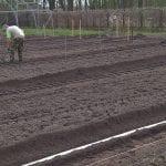 prace gruntowe w plantacji 2