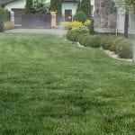 nawadnianie trawnika o wysokim rozproszeniu 3