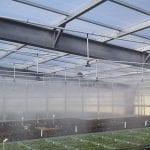 system zraszania sadzonek 4