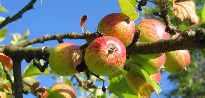jak nawadniać sady