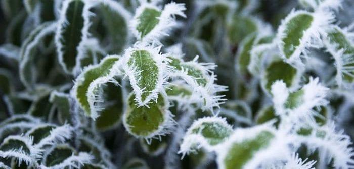podlewanie zima