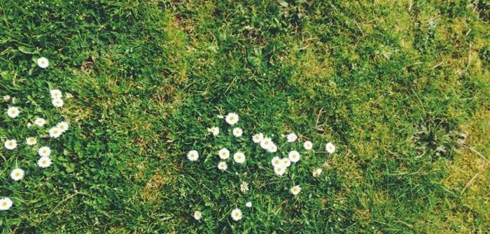pielęgnacja-trawnika-po-zimie